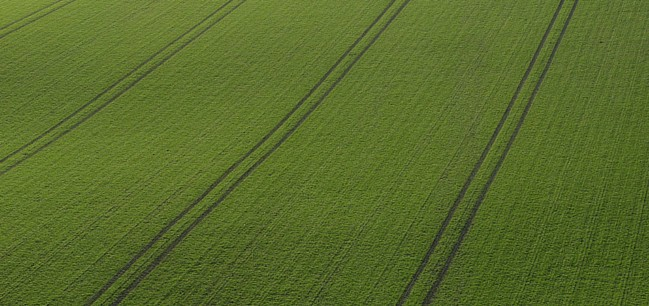 agriculture-field